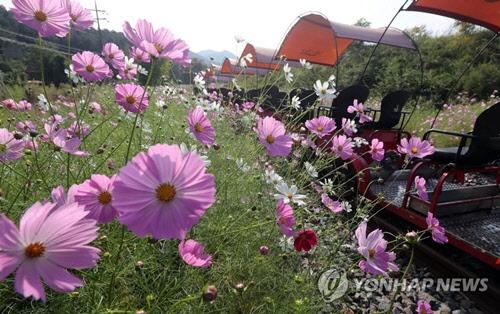 <오늘 날씨> 선선한 가을 날씨...18호 태풍 `탈림` 북상 중